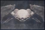 """Cyanotype on Paper 11.5"""" H x 17.75"""" W 2012"""