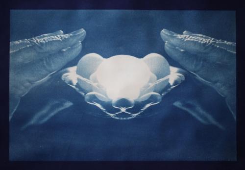 """Cyanotype on Paper 17.5"""" W x 12"""" H 2012"""